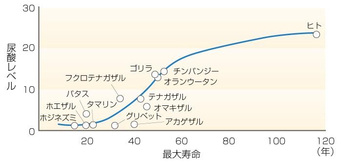 尿酸 値 が 高い 理由